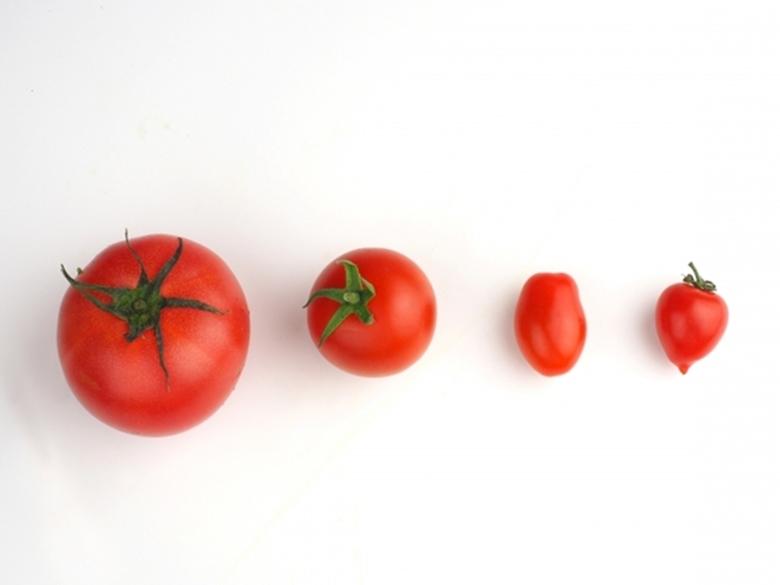 トマトの選び方と保存法